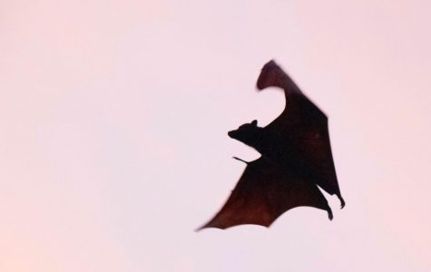 Megabats? patient zero? It's not sci-fi!