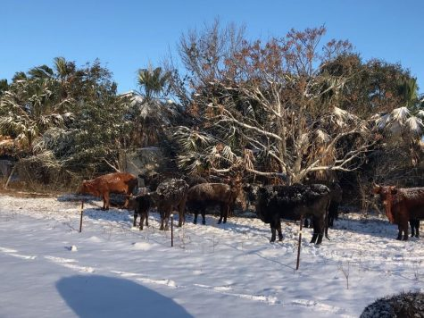 Snow in South Texas 2021: a look back